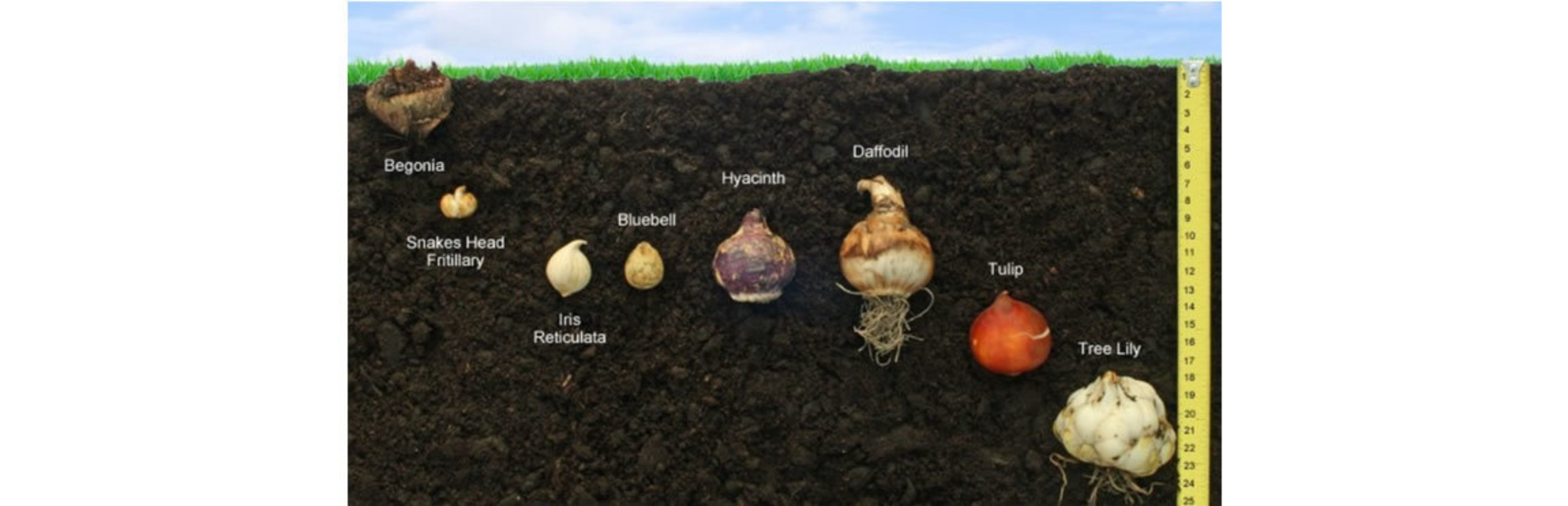 Bulbs and the curriculum