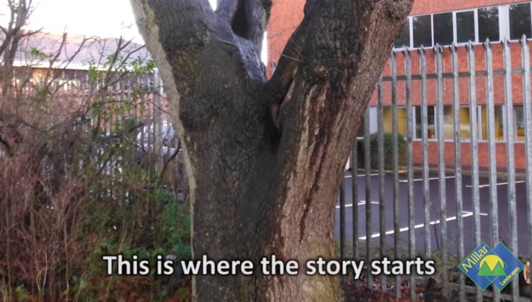 The story telling tree